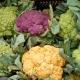 cauliflower_vegetables_colorful